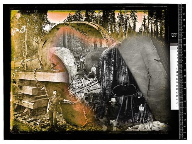 Ericson collage